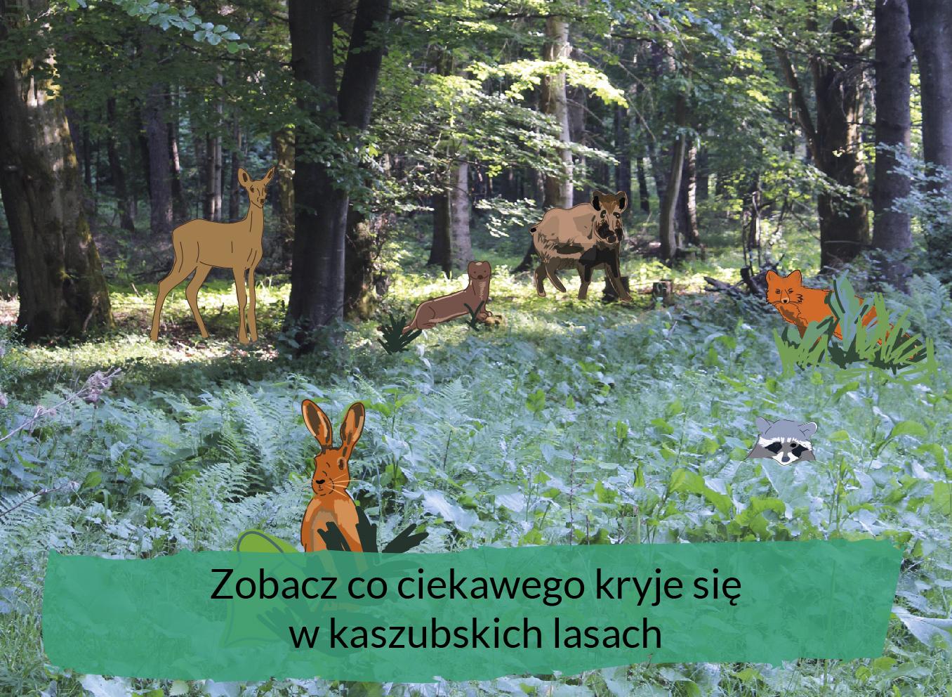 last, zwierzęta i tekst zobacz co ciekawego kryje się w kaszubskich lasach